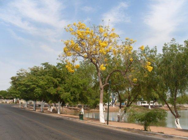 nainari_lagoon_ciudad_obregon_sonora_mexico_01