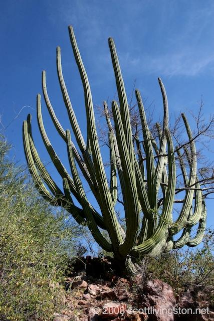 nacapule-canyon-sonora-mexico