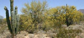 desierto-sonorense-mexico-sonoran-desert-arizona