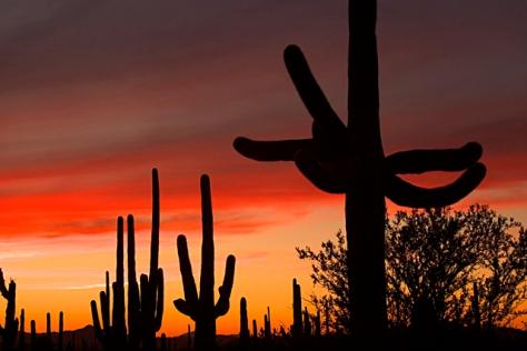 Arizona_Scenic_Sonoran Desert_Saguaro NP West_Saguaro Cactu