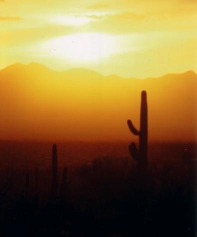 p138222-Tucson-Saguaro_sunset