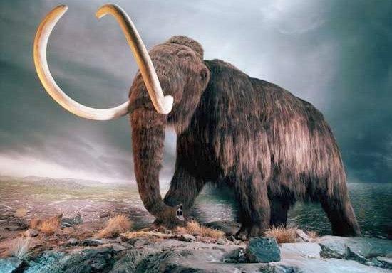 mamuts001
